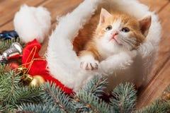 Γατάκι πιπεροριζών στο καπέλο santa στα πλαίσια Χριστουγέννων Στοκ Φωτογραφίες