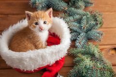 Γατάκι πιπεροριζών στο καπέλο santa στα πλαίσια Χριστουγέννων Στοκ εικόνα με δικαίωμα ελεύθερης χρήσης