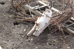 Γατάκι που ακονίζει τα νύχια του Στοκ φωτογραφία με δικαίωμα ελεύθερης χρήσης