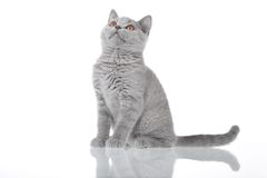 γατάκι που ανατρέχει στοκ φωτογραφίες