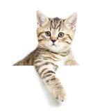Γατάκι που απομονώνεται Στοκ φωτογραφία με δικαίωμα ελεύθερης χρήσης