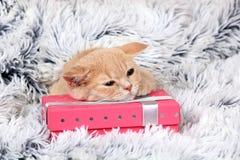 Γατάκι που βρίσκεται σε ένα κιβώτιο δώρων Στοκ Εικόνες