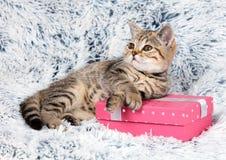 Γατάκι που βρίσκεται σε ένα κιβώτιο δώρων Στοκ φωτογραφίες με δικαίωμα ελεύθερης χρήσης