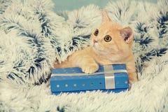 Γατάκι που βρίσκεται στο μπλε παρόν κιβώτιο Στοκ φωτογραφία με δικαίωμα ελεύθερης χρήσης