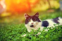 Γατάκι που βρίσκεται στο τριφύλλι Στοκ Φωτογραφία