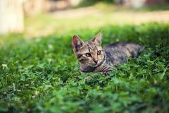Γατάκι που βρίσκεται στο τριφύλλι Στοκ Εικόνες