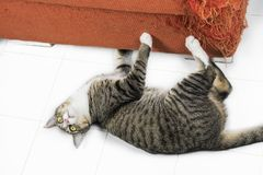 Γατάκι που γρατσουνίζει τον πορτοκαλή καναπέ υφάσματος στοκ εικόνα