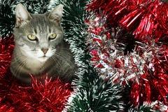 Γατάκι που καλύπτεται από tinsel Στοκ Εικόνες