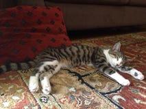 Γατάκι που κοιμάται 2 στοκ εικόνες