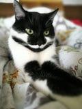 γατάκι που κουράζεται Στοκ Εικόνες