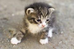 Γατάκι που μιμείται στοκ φωτογραφίες