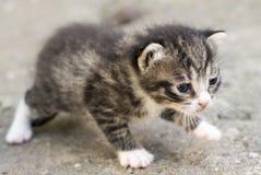 Γατάκι που μιμείται στοκ φωτογραφία