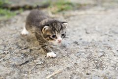 Γατάκι που μιμείται στοκ φωτογραφία με δικαίωμα ελεύθερης χρήσης