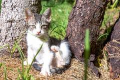 Γατάκι που προσπαθεί να γρατσουνιστεί στοκ εικόνες