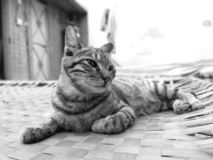 Γατάκι που προσπαθεί στον ύπνο στο κρεβάτι στοκ εικόνα