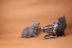 Γατάκι που τρώει από ένα κάρρο αγορών με τα τρόφιμα κατοικίδιων ζώων Στοκ Φωτογραφία