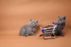 Γατάκι που τρώει από ένα κάρρο αγορών με τα τρόφιμα κατοικίδιων ζώων Στοκ Εικόνες