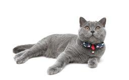 Γατάκι που φορά ένα περιλαίμιο με ένα τόξο σε ένα άσπρο υπόβαθρο στοκ εικόνα με δικαίωμα ελεύθερης χρήσης