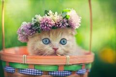 Γατάκι που φορά τη γιρλάντα Στοκ Εικόνα