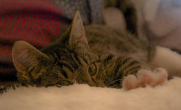 Γατάκι που φτάνει στοκ εικόνες με δικαίωμα ελεύθερης χρήσης