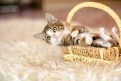 Γατάκι σε ένα καλάθι που βρίσκεται στην πλάτη του ηλικία 1 μήνας στοκ εικόνες