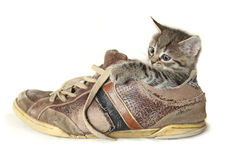 Γατάκι σε ένα μεγάλο παπούτσι στοκ φωτογραφία με δικαίωμα ελεύθερης χρήσης