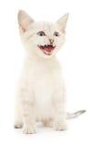 Γατάκι σε μια άσπρη ανασκόπηση Στοκ φωτογραφία με δικαίωμα ελεύθερης χρήσης