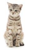Γατάκι σε μια άσπρη ανασκόπηση Στοκ Φωτογραφίες