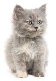 Γατάκι σε μια άσπρη ανασκόπηση Στοκ Φωτογραφία