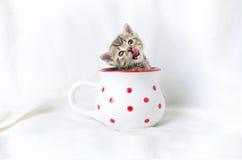Γατάκι σε μια κούπα Στοκ εικόνες με δικαίωμα ελεύθερης χρήσης