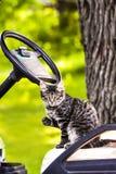 Γατάκι σε μια τέχνη γκολφ Στοκ Φωτογραφία