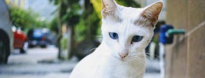 γατάκι σκεπτικό στοκ φωτογραφία με δικαίωμα ελεύθερης χρήσης
