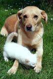 γατάκι σκυλιών από κοινού στοκ φωτογραφία