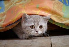γατάκι σπορείων κάτω Στοκ Εικόνες