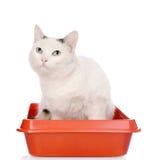 Γατάκι στην κόκκινη πλαστική γάτα απορριμάτων η ανασκόπηση απομόνωσε το λευκό Στοκ Εικόνες