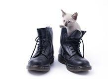 Γατάκι στην μπότα που απομονώνεται στο λευκό στοκ εικόνες