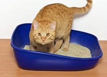Γατάκι στην μπλε πλαστική γάτα απορριμάτων Στοκ εικόνες με δικαίωμα ελεύθερης χρήσης