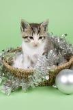 Γατάκι στη διακόσμηση Χριστουγέννων Στοκ Φωτογραφία