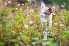 Γατάκι στη φύση Στοκ φωτογραφίες με δικαίωμα ελεύθερης χρήσης