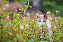 Γατάκι στη φύση Στοκ Φωτογραφίες