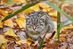 Γατάκι στη χλόη Στοκ Εικόνες