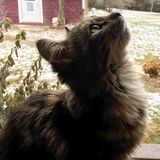 Γατάκι στον ήλιο στοκ εικόνες