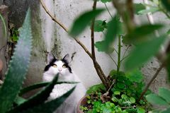 Γατάκι στον κήπο στοκ εικόνα με δικαίωμα ελεύθερης χρήσης