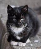 Γατάκι στο ζωικό καταφύγιο Στοκ Φωτογραφία