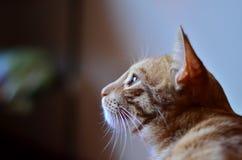Γατάκι στο χρόνο περισυλλογής Στοκ Εικόνες