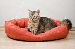 γατάκι τιγρέ στοκ εικόνες με δικαίωμα ελεύθερης χρήσης