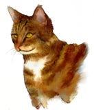 Γατάκι τιγρών Στοκ εικόνες με δικαίωμα ελεύθερης χρήσης
