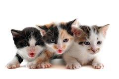 γατάκι τρία στοκ φωτογραφίες με δικαίωμα ελεύθερης χρήσης