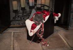 Γατάκι Χριστουγέννων Στοκ εικόνες με δικαίωμα ελεύθερης χρήσης