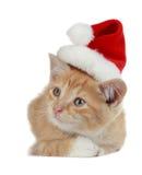 γατάκι Χριστουγέννων Στοκ Εικόνες